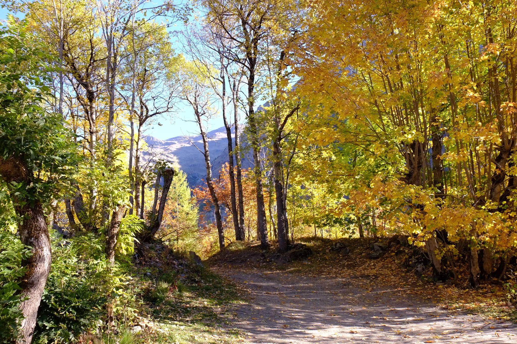 paysage champsaur automne